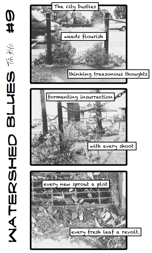 FOR WEB PUBLISH_USE THIS VERSION_Watershed Blues #9 (5x8)